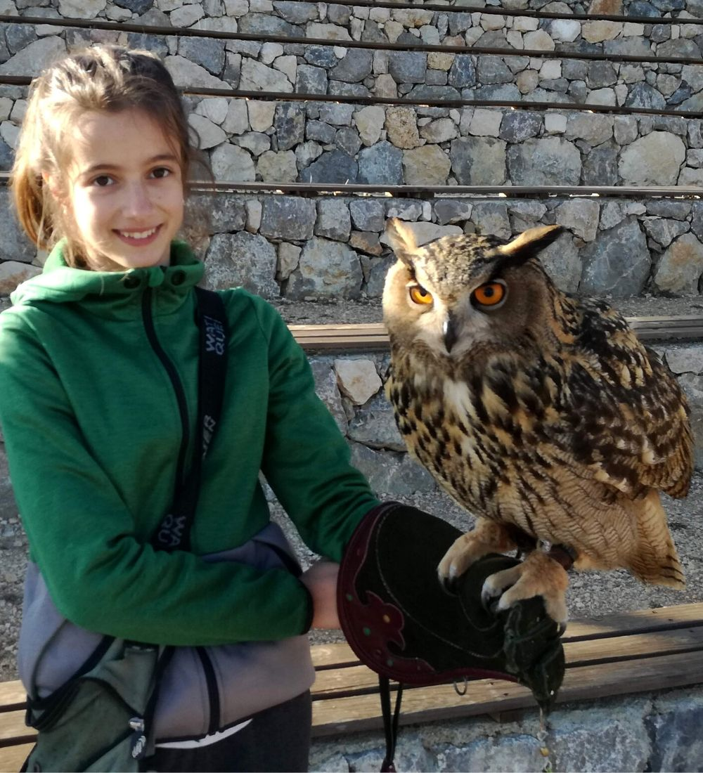 Activity with owls